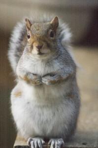 BegginSquirrel