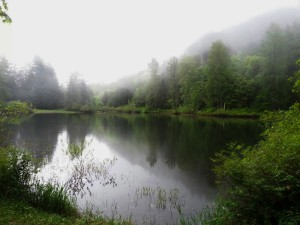 Drizzly Brewster Lake