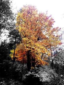 Fall Colors Cascade Park