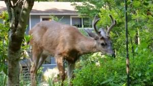 Three Point Deer