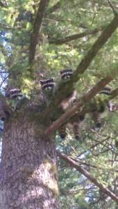 Tree Bandits