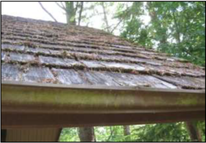Detail of the Cedar Shake Roof, installed in 1967.